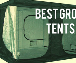 Best Growing Tent